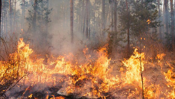 Dichiarato lo stato di alto rischio incendio boschivo